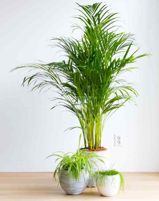 Best Indoor Low Light Trees