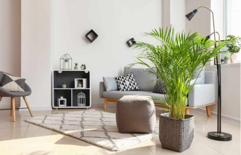 Areca Palm - best indoor trees for low light - don't need light