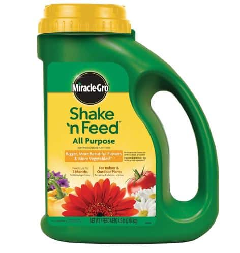 Best-fertilizer-for-citrus-trees-Miracle-Gro