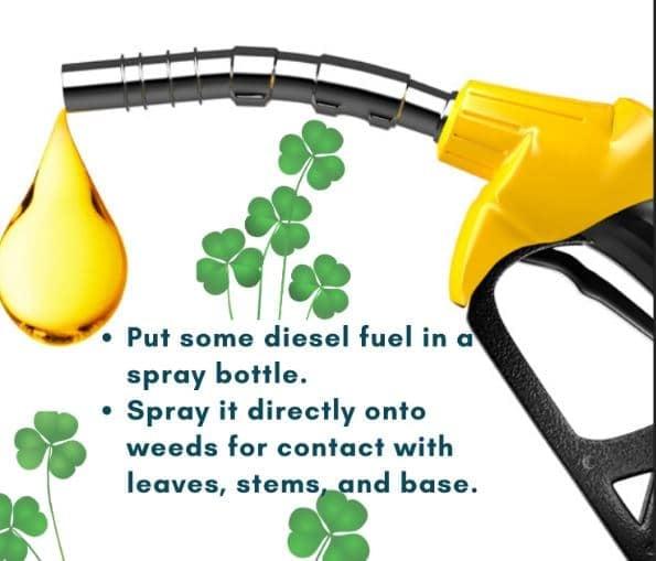 Diesel Fuel Weed Killer