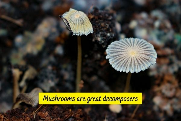 Are mushrooms decomposers?