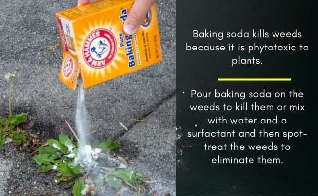 Does baking soda kill weeds in lawns and gardens