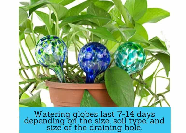 How long do watering globes last?