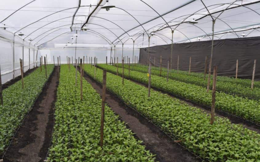 Hoop house vs greenhouse differences and uses