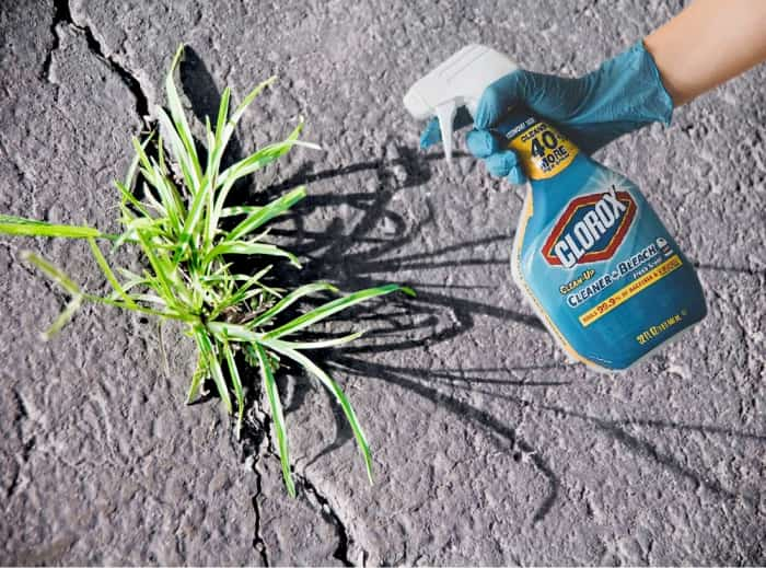 Does bleach kill weeds and grass